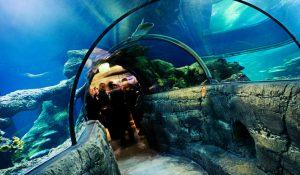 aquarium-londra-agentie-de-turism