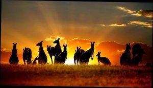 australia, oceania, agentie de turism