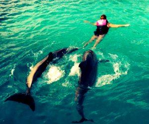 bimini-bahamas-dolphin-swim