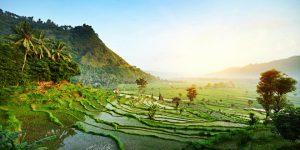 Sejur, Bali, Agentie de turism Constanta